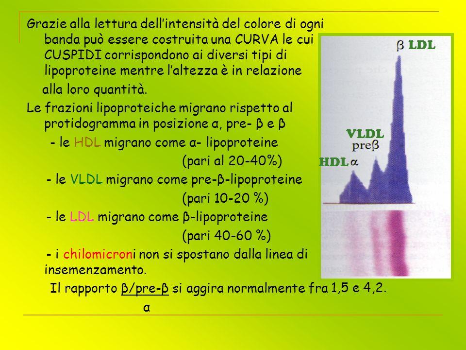 Grazie alla lettura dell'intensità del colore di ogni banda può essere costruita una CURVA le cui CUSPIDI corrispondono ai diversi tipi di lipoproteine mentre l'altezza è in relazione
