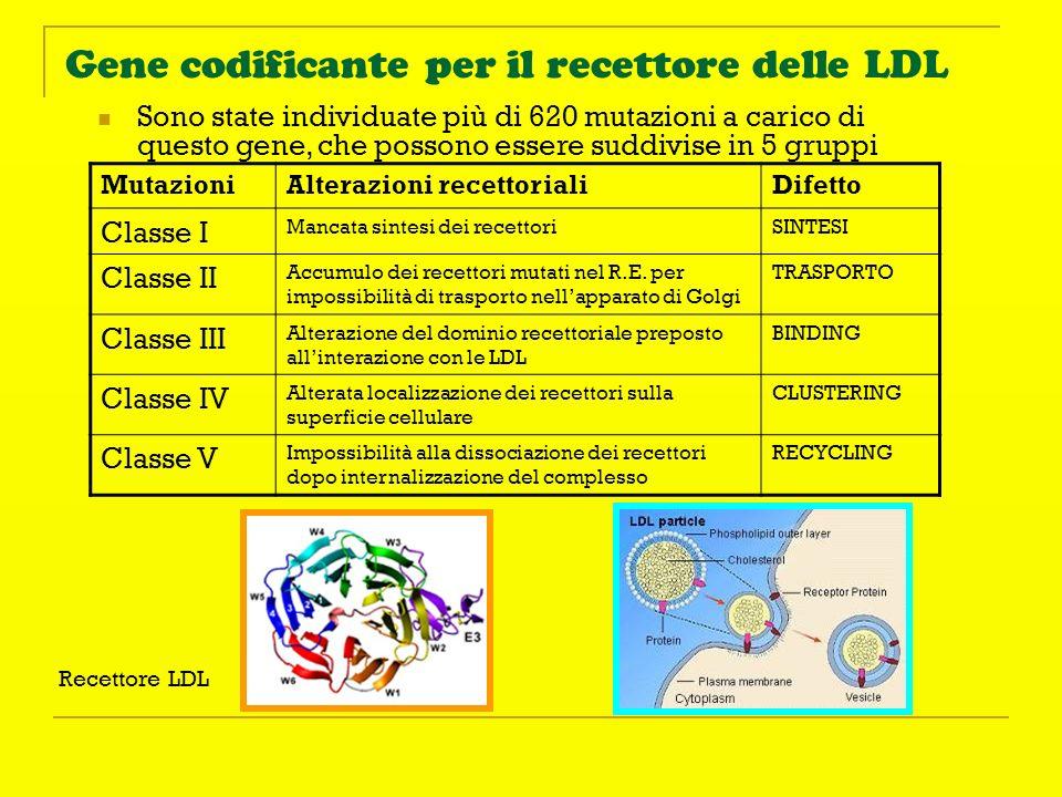 Gene codificante per il recettore delle LDL