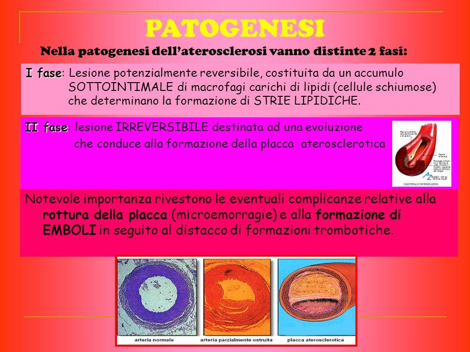 Nella patogenesi dell'aterosclerosi vanno distinte 2 fasi: