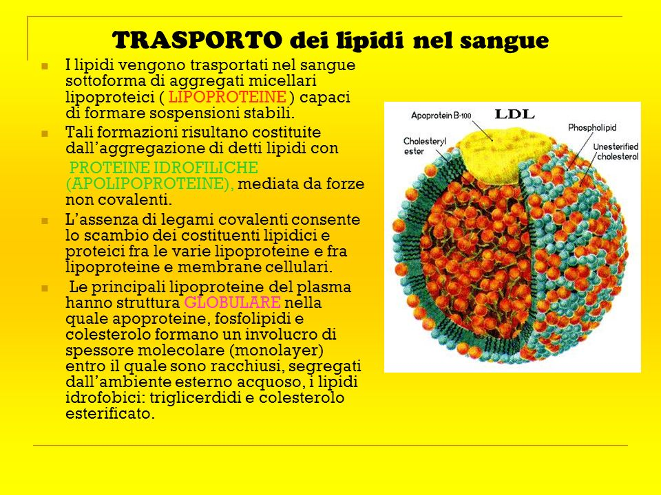 TRASPORTO dei lipidi nel sangue