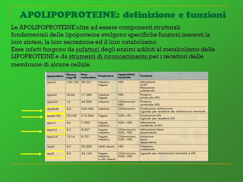 APOLIPOPROTEINE: definizione e funzioni