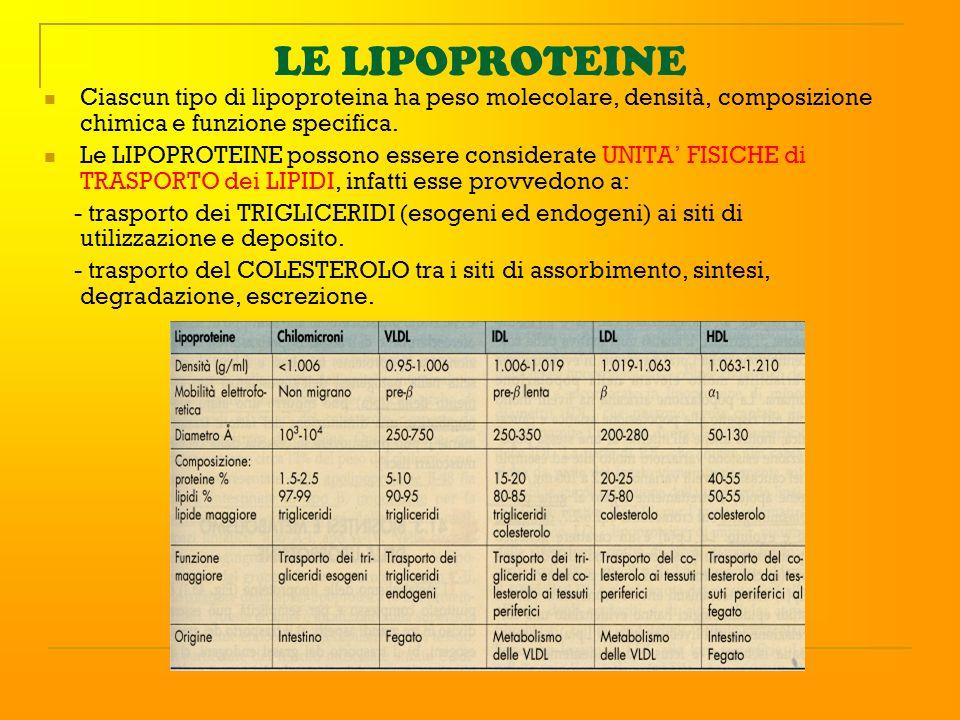 LE LIPOPROTEINE Ciascun tipo di lipoproteina ha peso molecolare, densità, composizione chimica e funzione specifica.