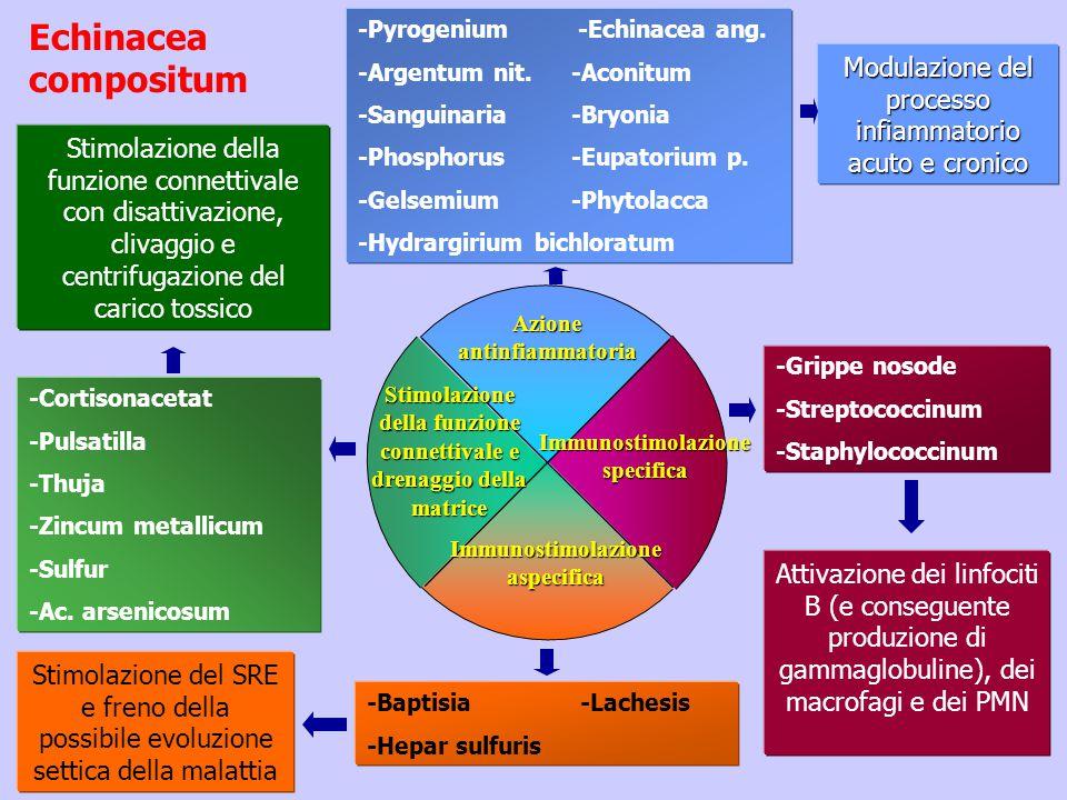Echinacea compositum -Pyrogenium -Echinacea ang. -Argentum nit. -Aconitum. -Sanguinaria -Bryonia.