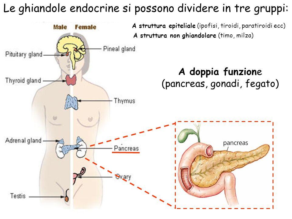 Le ghiandole endocrine si possono dividere in tre gruppi: