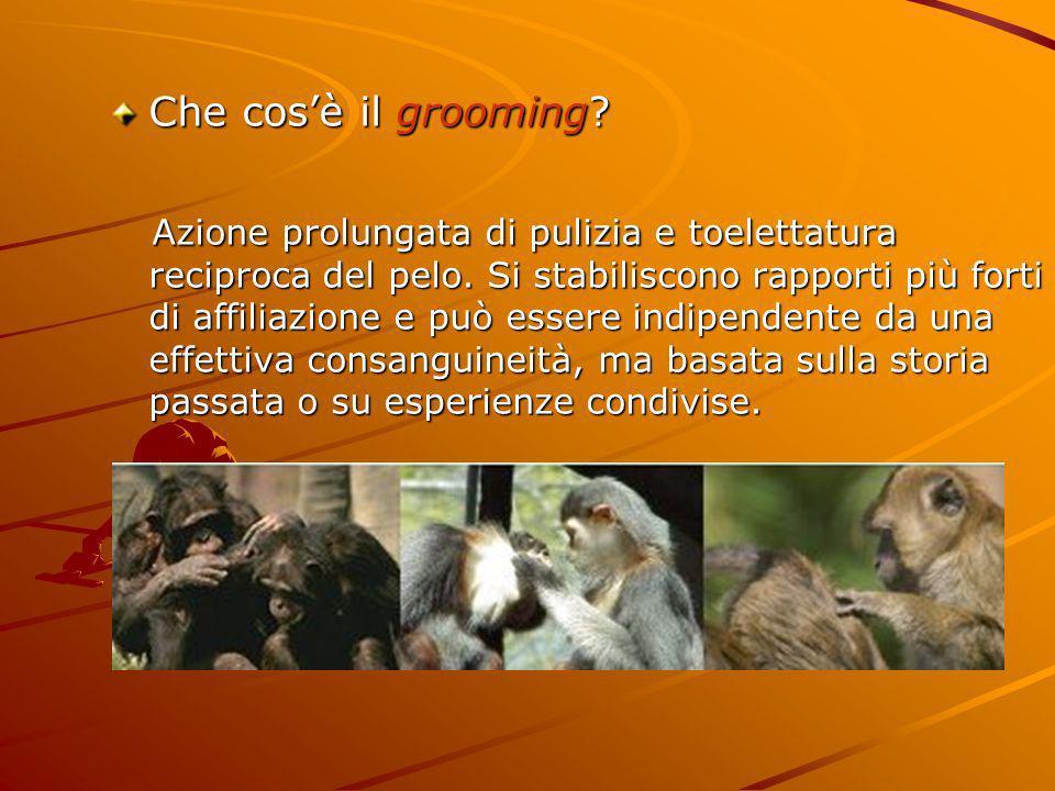 Che cos'è il grooming