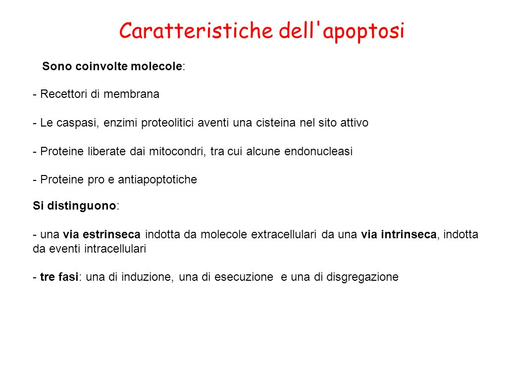 Caratteristiche dell apoptosi