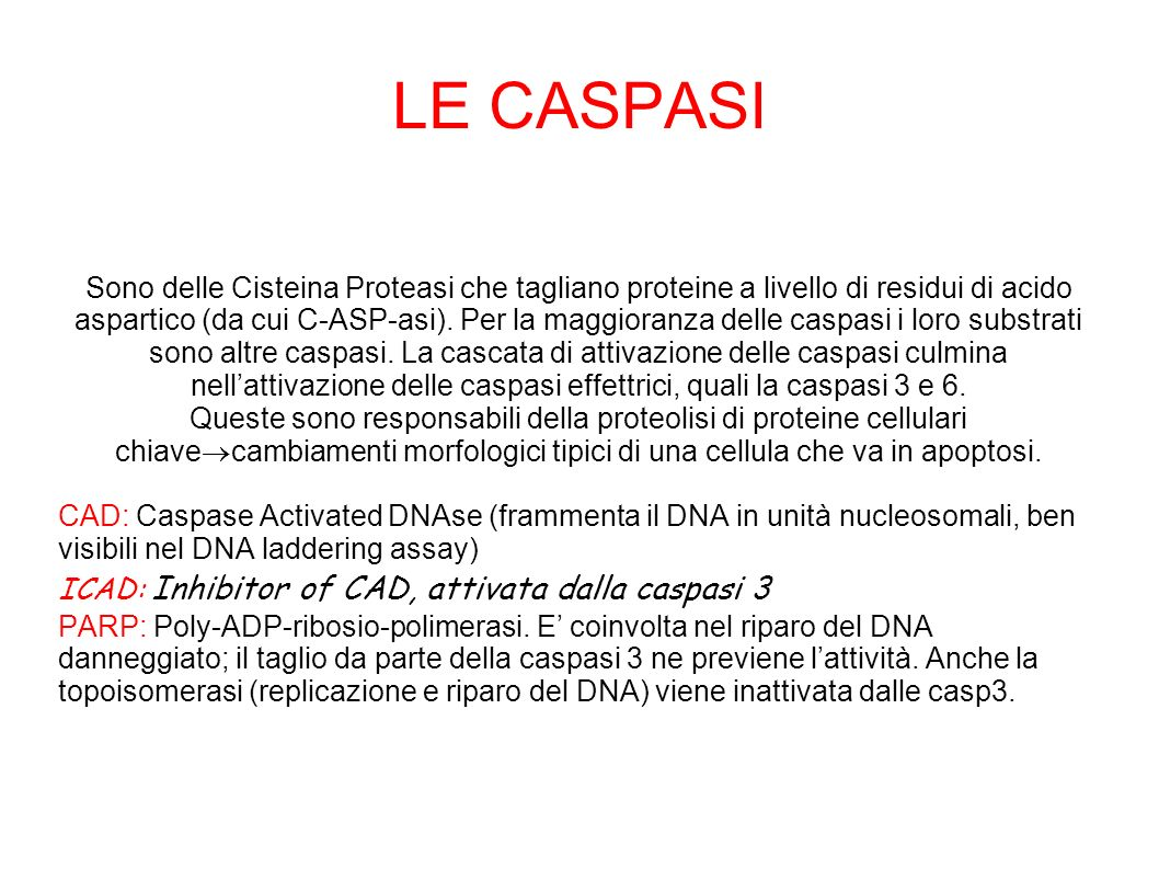 LE CASPASI