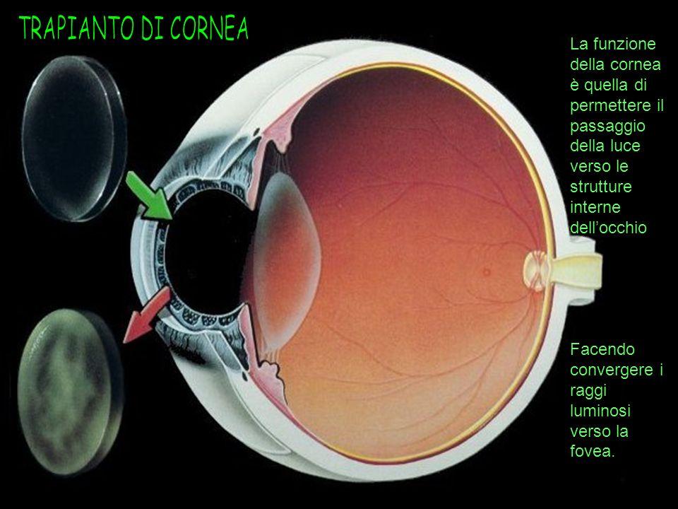 TRAPIANTO DI CORNEA La funzione della cornea è quella di permettere il passaggio della luce verso le strutture interne dell'occhio.