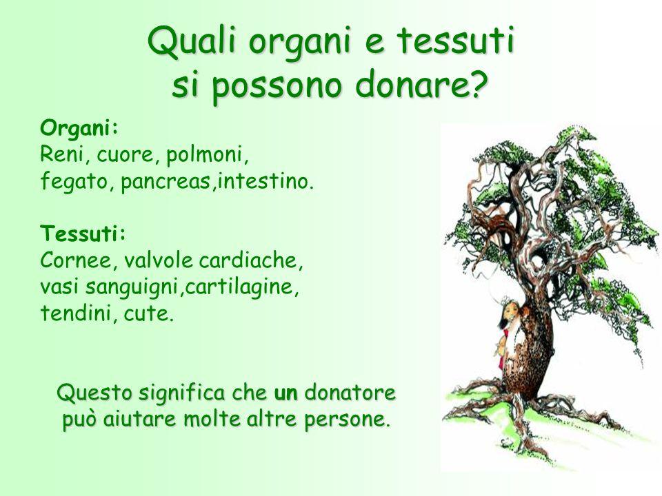 Quali organi e tessuti si possono donare