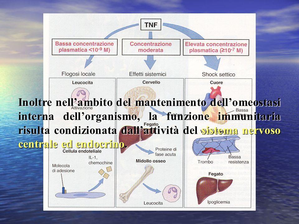 Inoltre nell'ambito del mantenimento dell'omeostasi interna dell'organismo, la funzione immunitaria risulta condizionata dall'attività del sistema nervoso centrale ed endocrino.