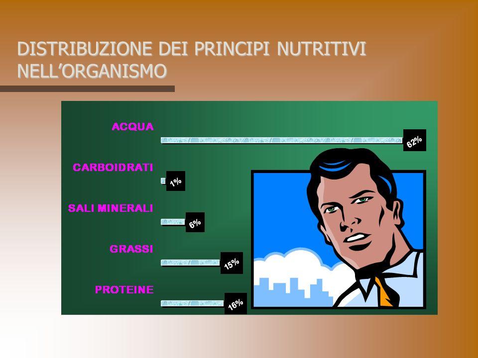 DISTRIBUZIONE DEI PRINCIPI NUTRITIVI NELL'ORGANISMO