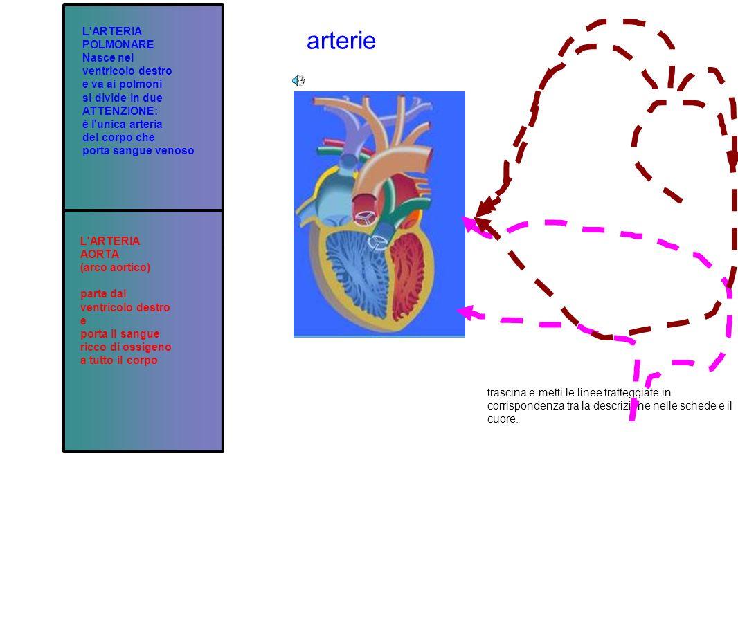 arterie L ARTERIA POLMONARE Nasce nel ventricolo destro