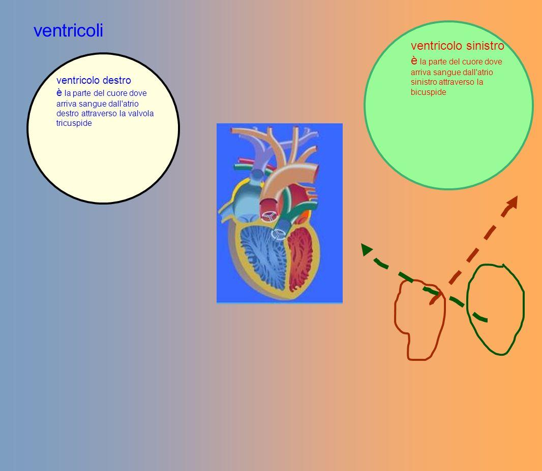 ventricoli ventricolo sinistro