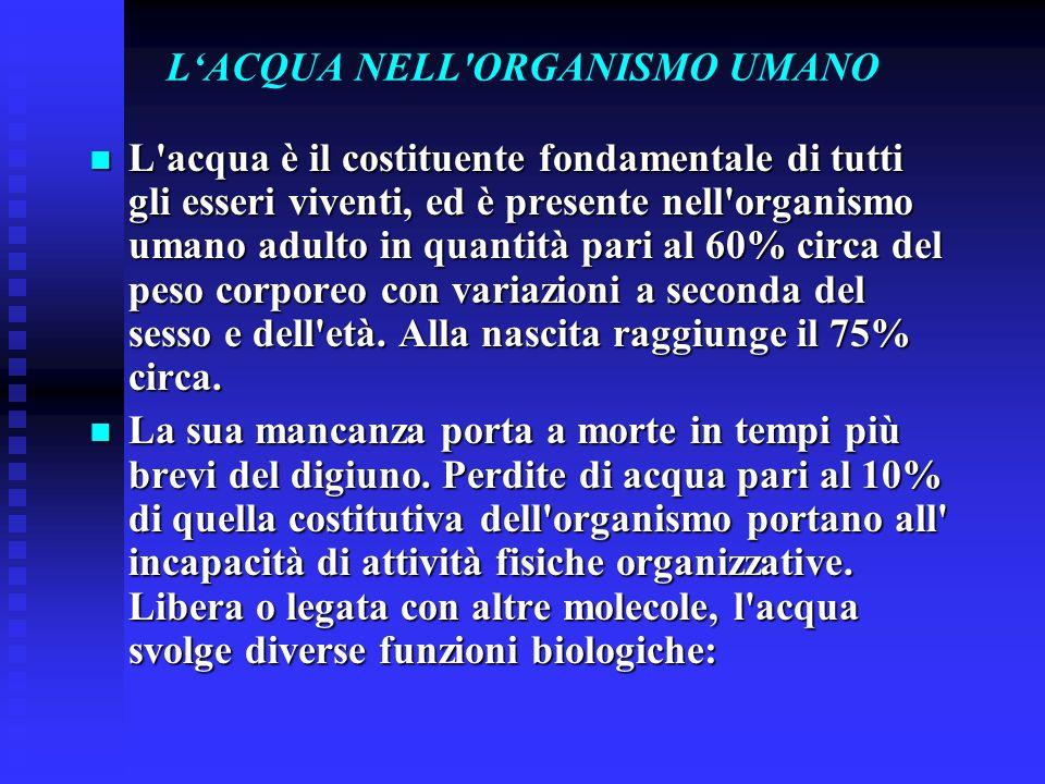 L'ACQUA NELL ORGANISMO UMANO