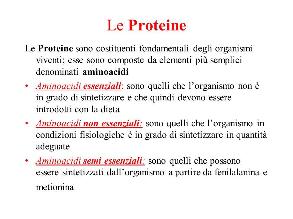 Le Proteine Le Proteine sono costituenti fondamentali degli organismi viventi; esse sono composte da elementi più semplici denominati aminoacidi.