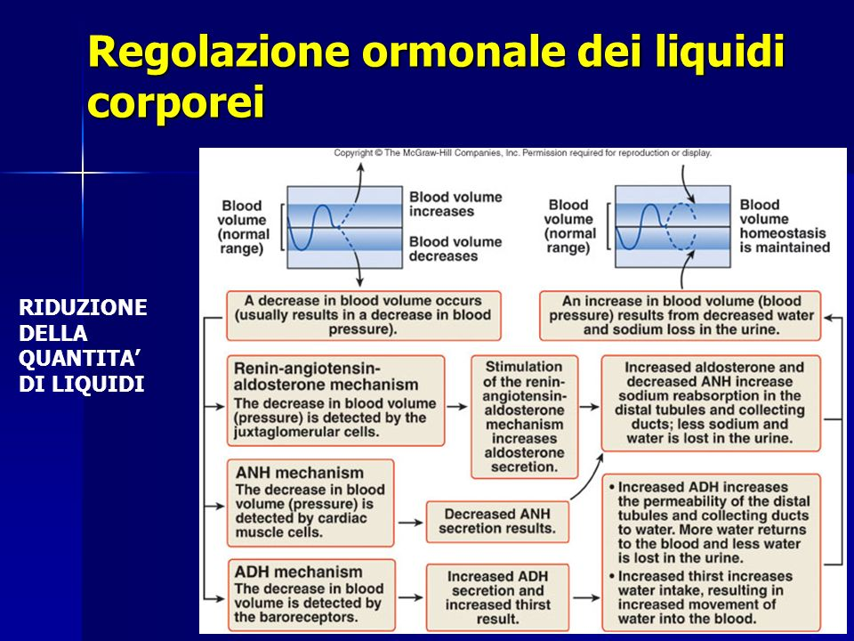 Regolazione ormonale dei liquidi corporei