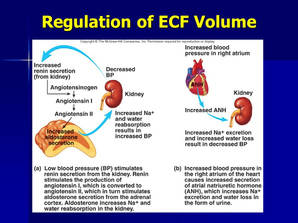 Regulation of ECF Volume