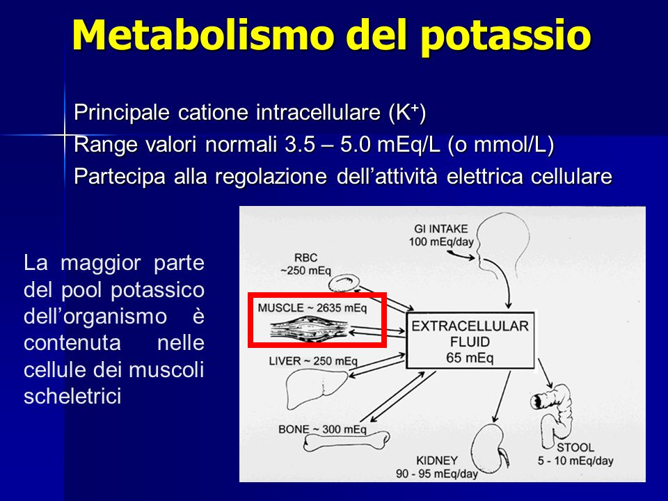 Metabolismo del potassio