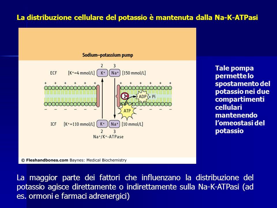 La distribuzione cellulare del potassio è mantenuta dalla Na-K-ATPasi