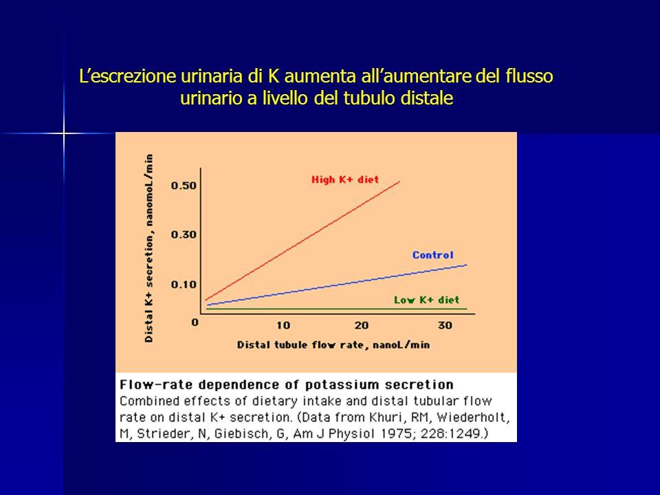 L'escrezione urinaria di K aumenta all'aumentare del flusso urinario a livello del tubulo distale