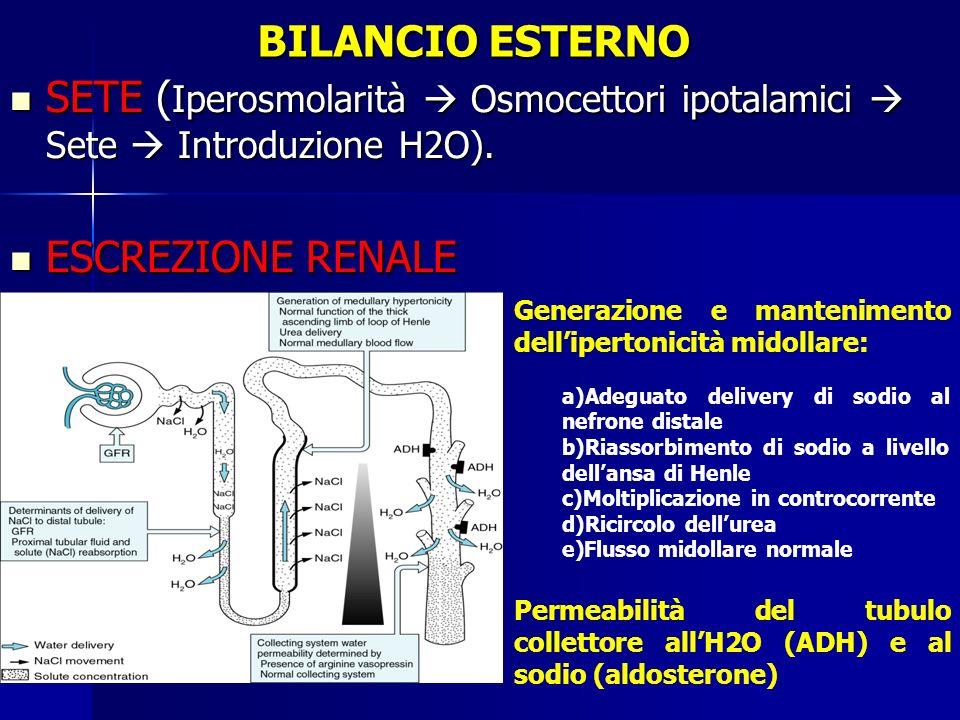 BILANCIO ESTERNO SETE (Iperosmolarità  Osmocettori ipotalamici  Sete  Introduzione H2O). ESCREZIONE RENALE.