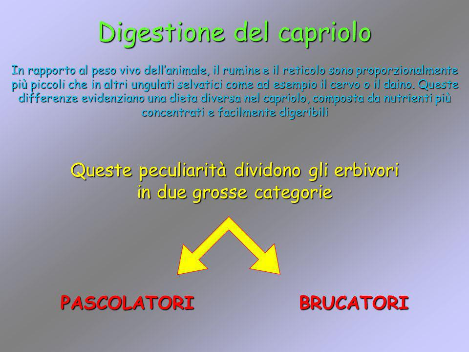 Digestione del capriolo