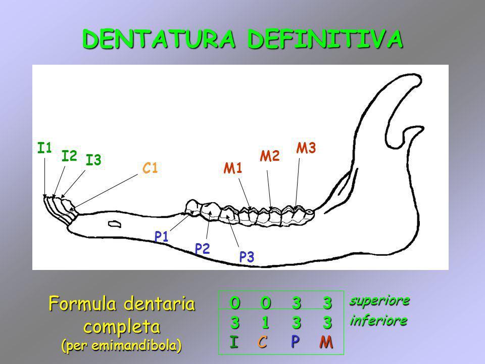 Formula dentaria completa