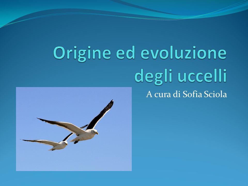 Origine ed evoluzione degli uccelli