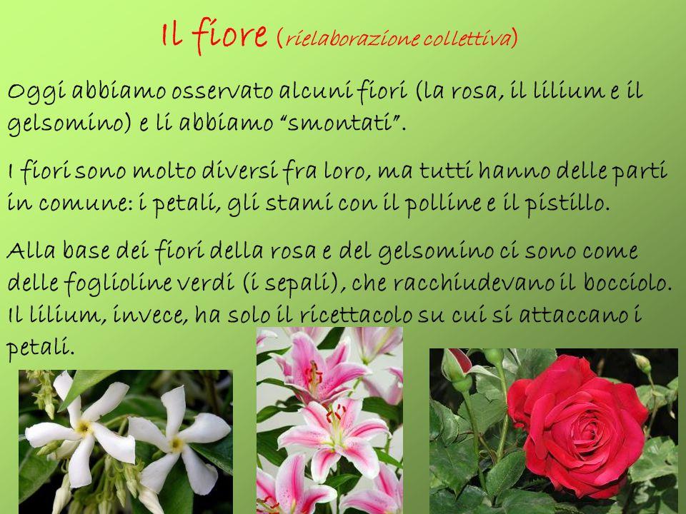 Il fiore (rielaborazione collettiva)