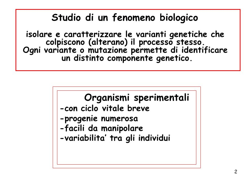 Studio di un fenomeno biologico