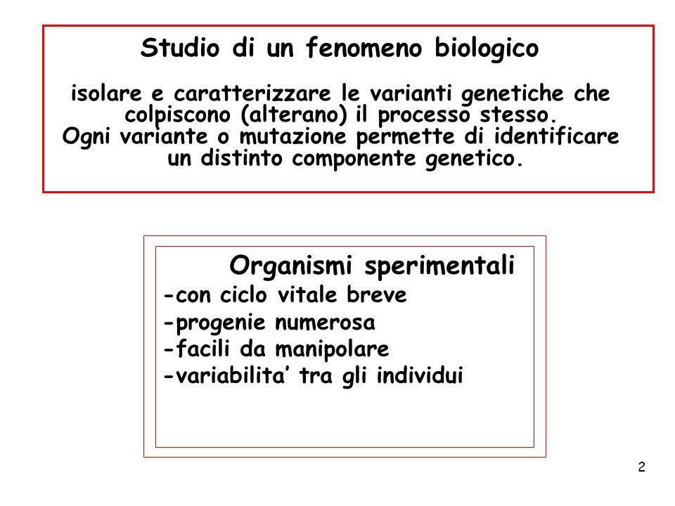 Studio di un fenomeno biologico
