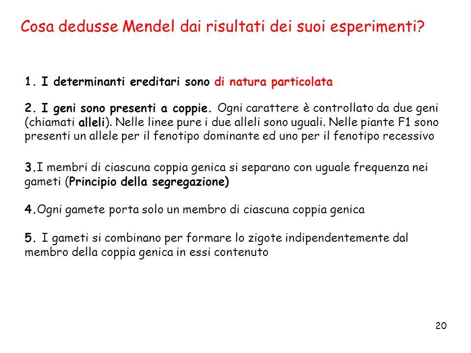 Cosa dedusse Mendel dai risultati dei suoi esperimenti