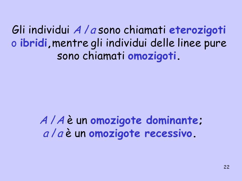 Gli individui A /a sono chiamati eterozigoti o ibridi,mentre gli individui delle linee pure sono chiamati omozigoti.