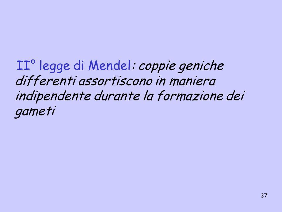 II° legge di Mendel: coppie geniche differenti assortiscono in maniera indipendente durante la formazione dei gameti