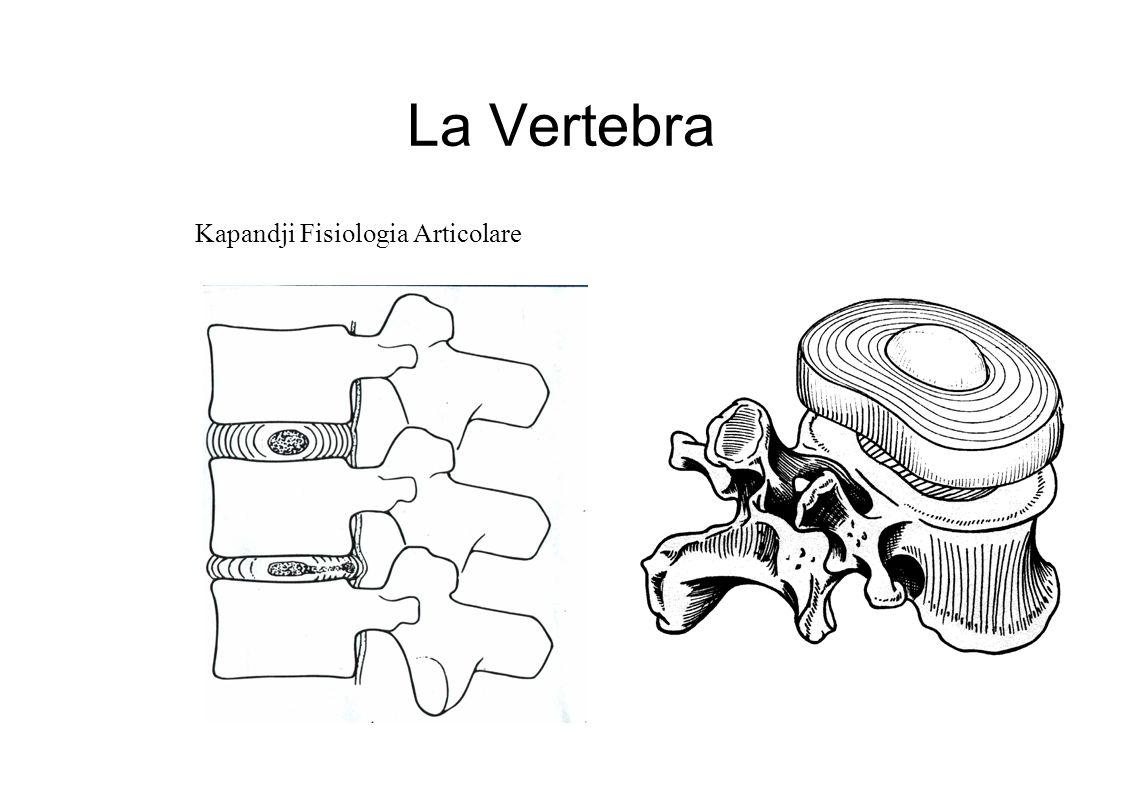La Vertebra Kapandji Fisiologia Articolare