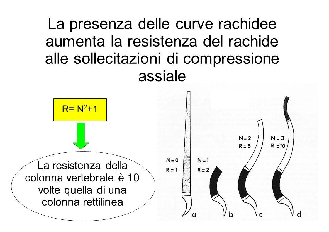 La presenza delle curve rachidee aumenta la resistenza del rachide alle sollecitazioni di compressione assiale