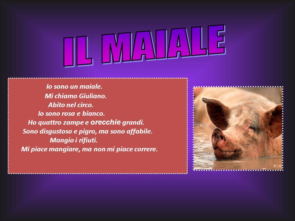 IL MAIALE Io sono un maiale. Mi chiamo Giuliano. Abito nel circo.