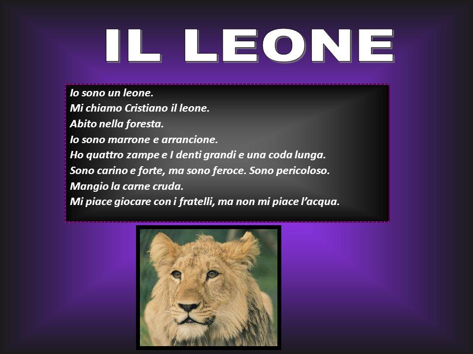 IL LEONE Io sono un leone. Mi chiamo Cristiano il leone.