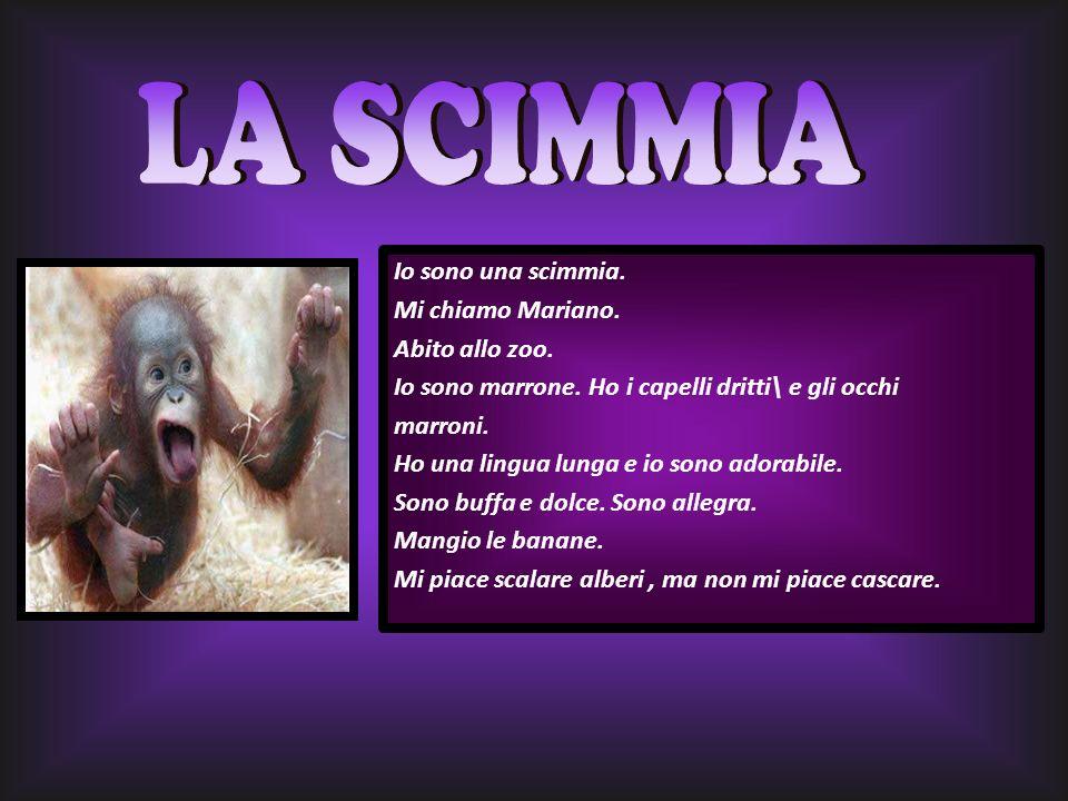 LA SCIMMIA Io sono una scimmia. Mi chiamo Mariano. Abito allo zoo.