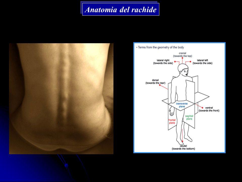 Anatomia del rachide