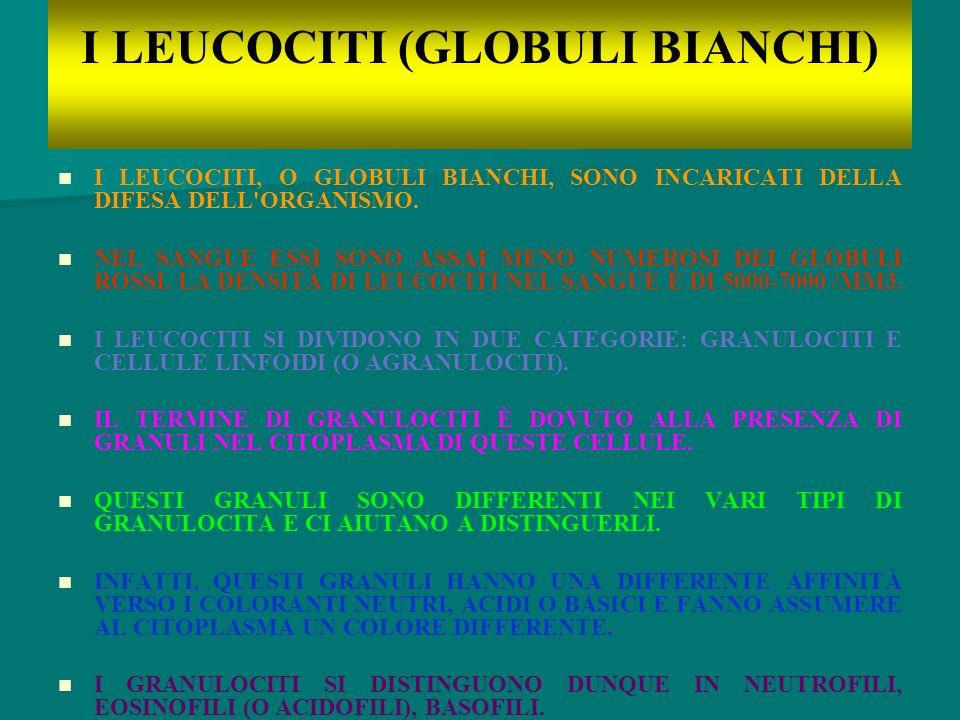 I LEUCOCITI (GLOBULI BIANCHI)