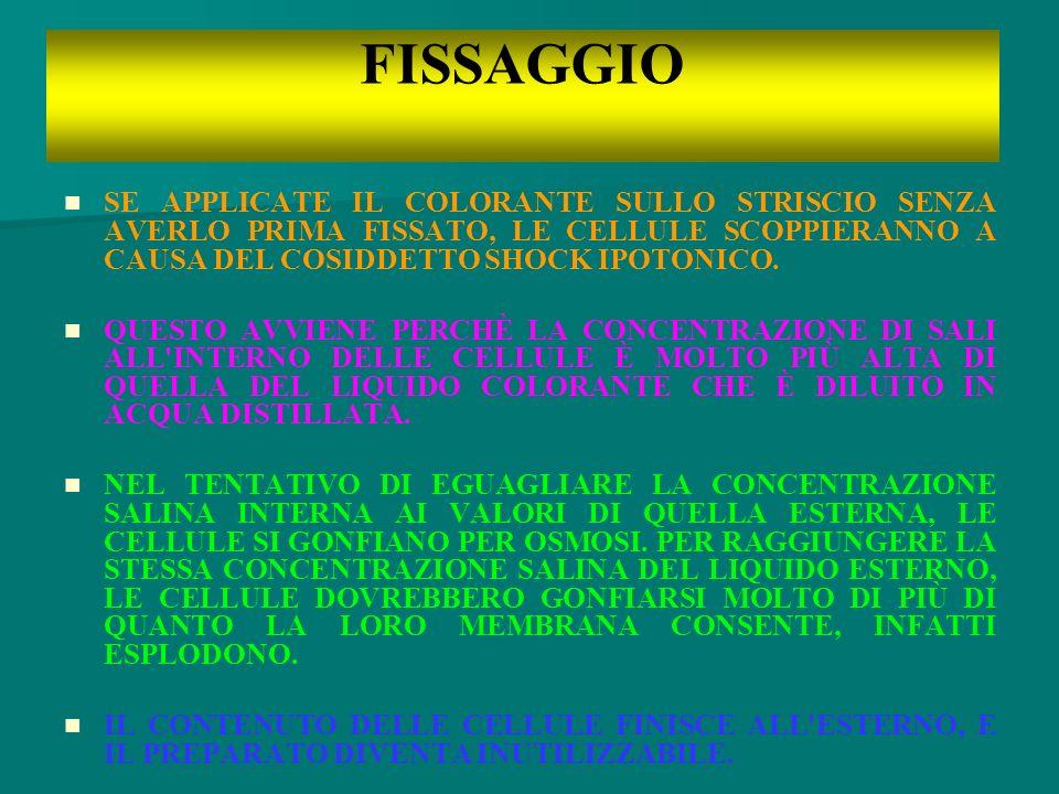 FISSAGGIO SE APPLICATE IL COLORANTE SULLO STRISCIO SENZA AVERLO PRIMA FISSATO, LE CELLULE SCOPPIERANNO A CAUSA DEL COSIDDETTO SHOCK IPOTONICO.