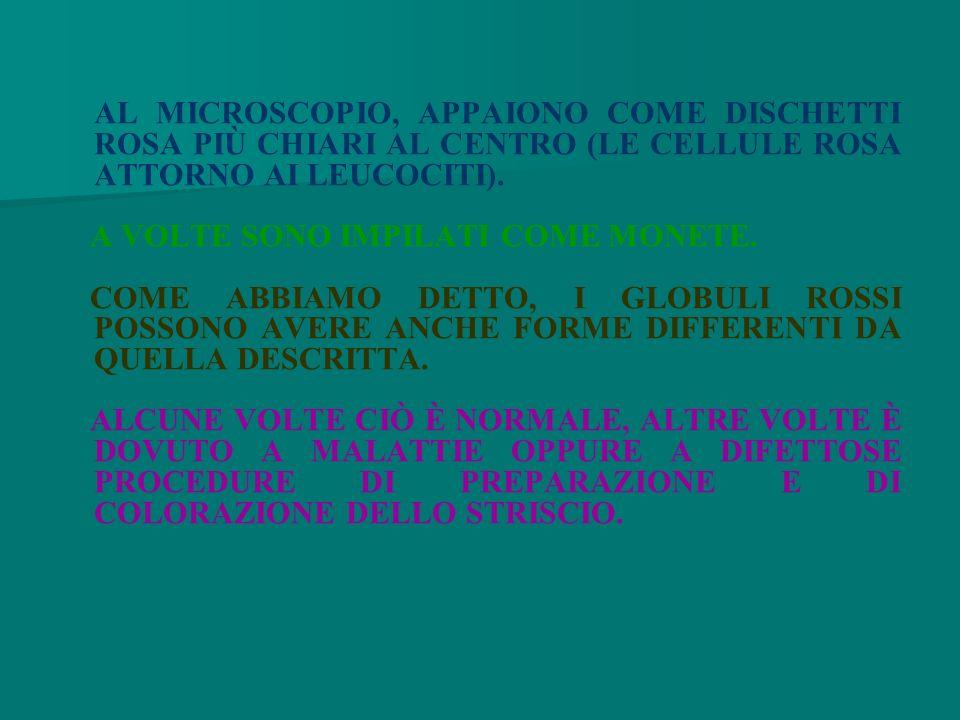 AL MICROSCOPIO, APPAIONO COME DISCHETTI ROSA PIÙ CHIARI AL CENTRO (LE CELLULE ROSA ATTORNO AI LEUCOCITI).