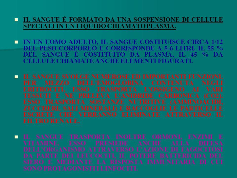 IL SANGUE È FORMATO DA UNA SOSPENSIONE DI CELLULE SPECIALI IN UN LIQUIDO CHIAMATO PLASMA.