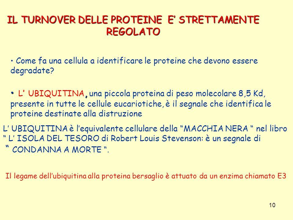 IL TURNOVER DELLE PROTEINE E' STRETTAMENTE REGOLATO