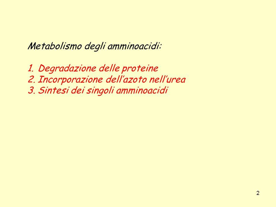 Metabolismo degli amminoacidi: