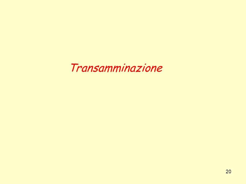 Transamminazione