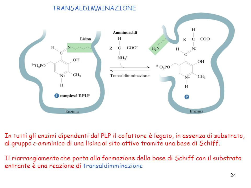 TRANSALDIMMINAZIONE