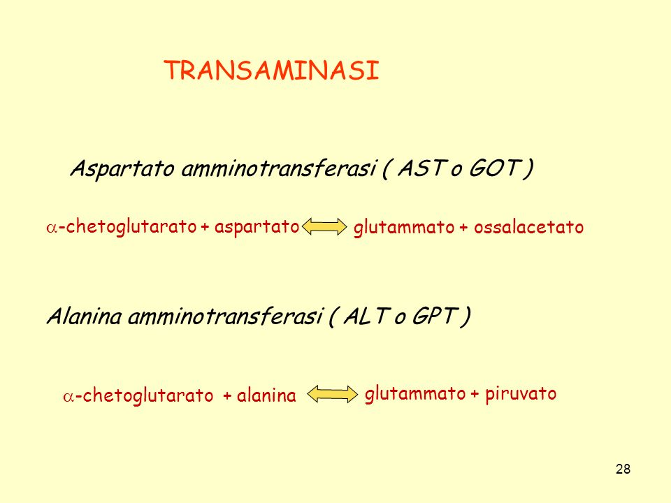 TRANSAMINASI Aspartato amminotransferasi ( AST o GOT )