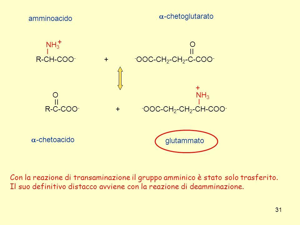 -OOC-CH2-CH2-C-COO- II. O. R-C-COO- R-CH-COO- I. NH3. + -OOC-CH2-CH2-CH-COO- amminoacido. a-chetoglutarato.